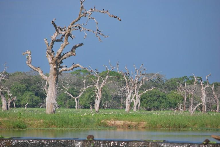 Yala_Wetland