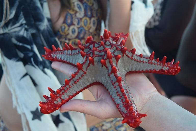 Amazing marine life – starfish
