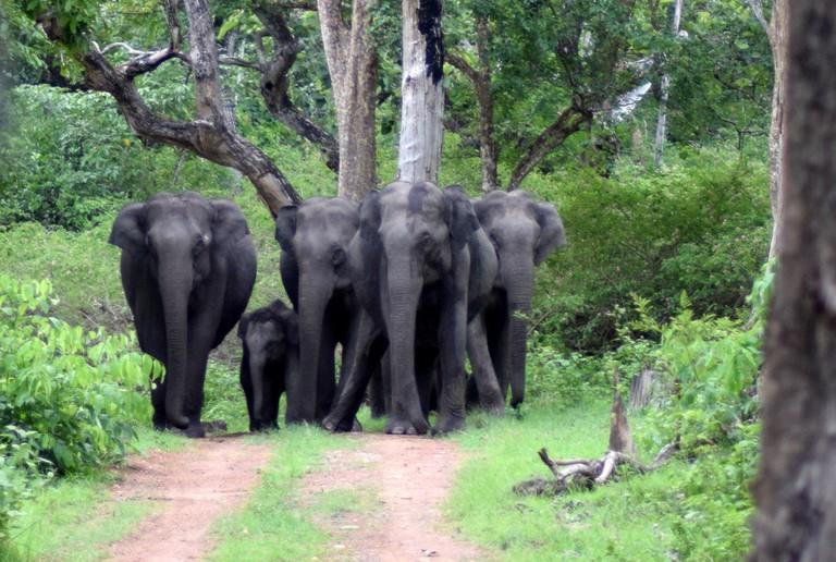 1.BNP_elephant_herd_