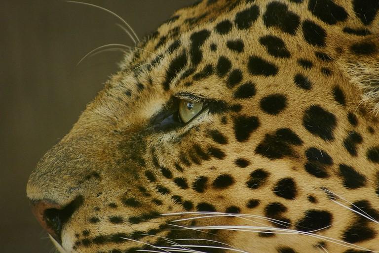 A leopard at Jungle Park