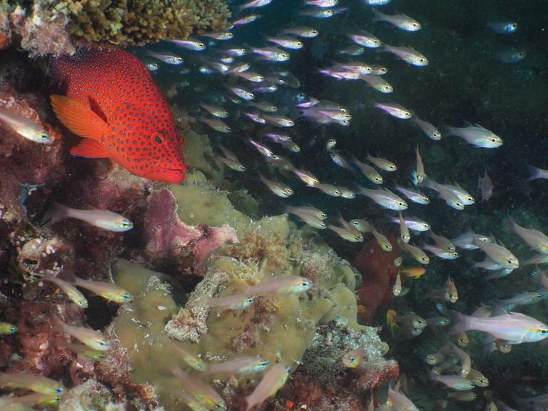 Brightly coloured fish of Mafia Island