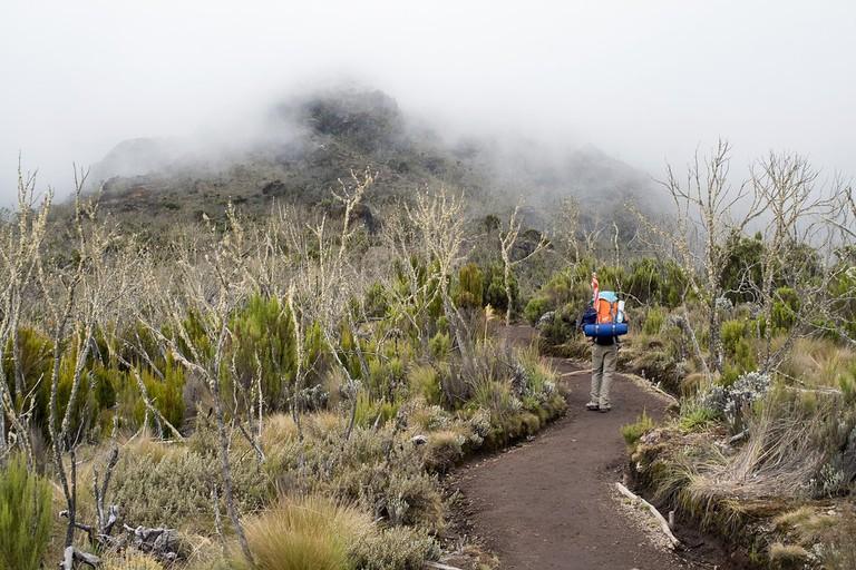 Machame route, Mount Kilimanjaro