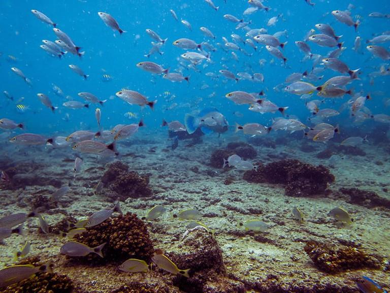 Diving off Contadora Island