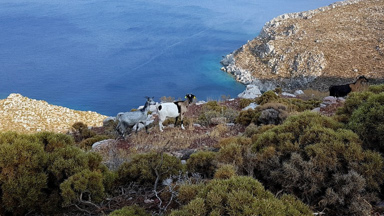 Hiking in Tilos means meeting many of its residents