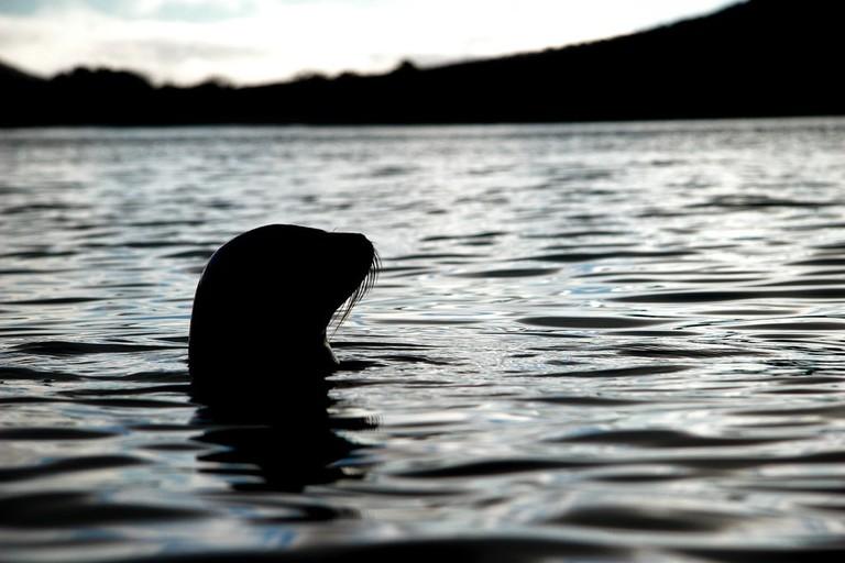 Sea Lion on Floreana Island