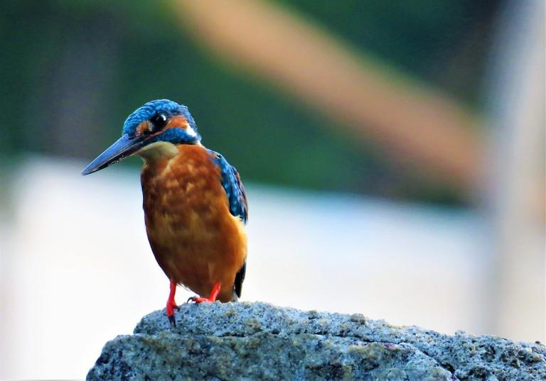 6.kumarakom_bird_sanctuary_