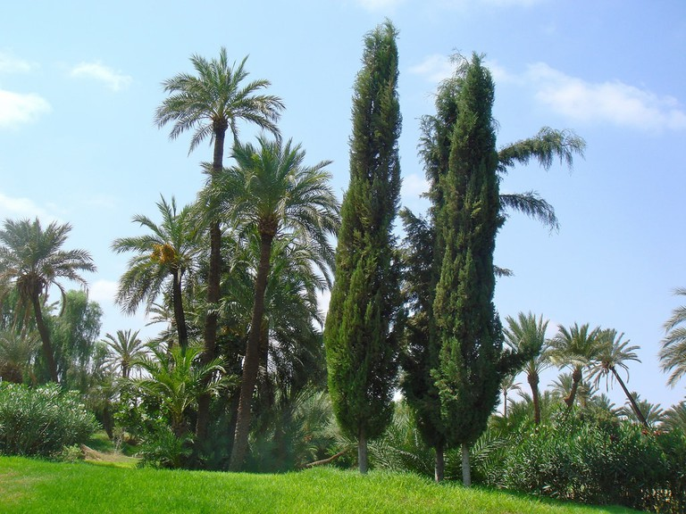 Trees in Morocco