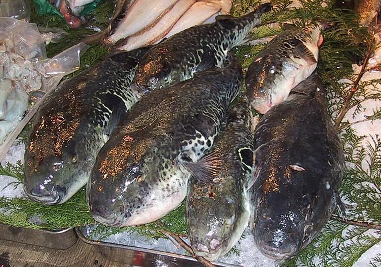640px-Fugu.Tsukiji.CR
