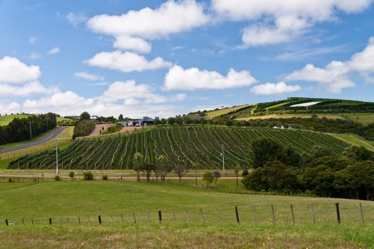 A vineyard on Waiheke Island