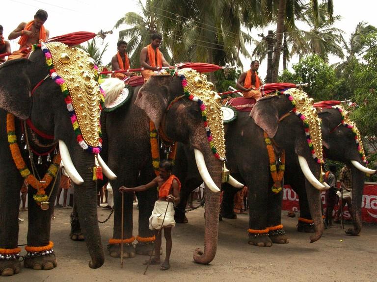 7.elephants_