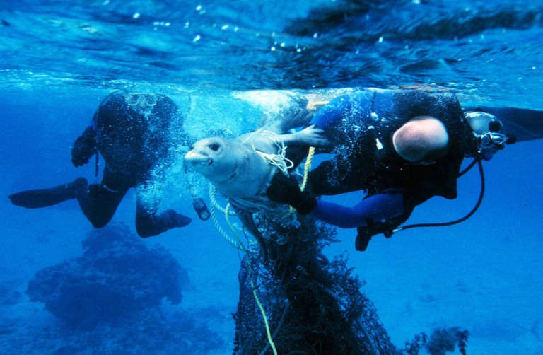 Seal trapped in fishing net