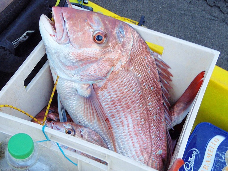 Snapper | © G=] / Flickr