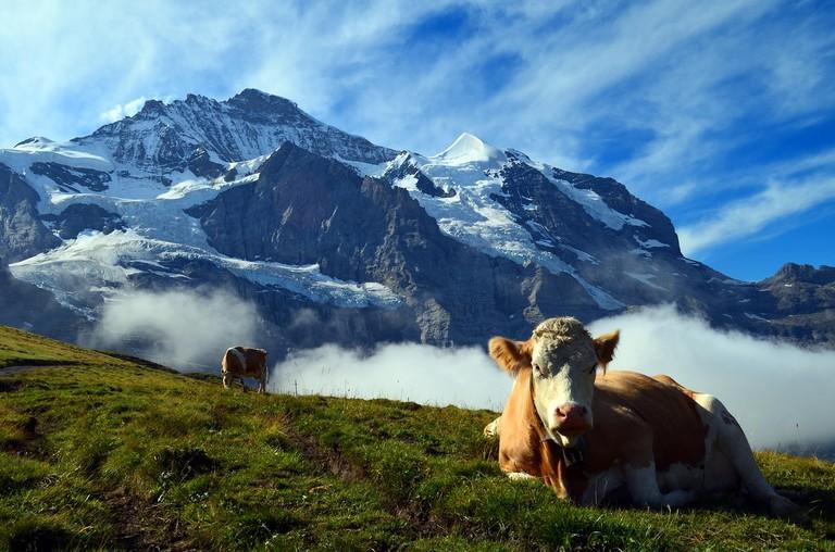 alpine-1643834_1280