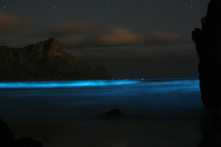 Bio-luminescent plankton © Wiki Commons / BMC Ecology