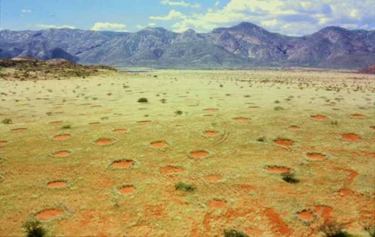 Fairy circles in Namibia