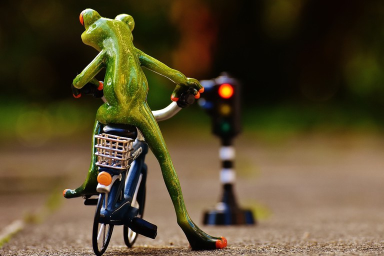 frog-1726766_1280