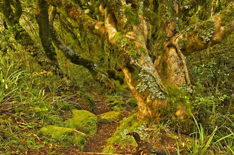 Stroll through a storybook forest