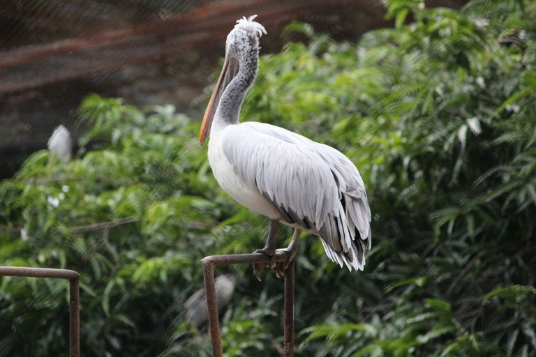 Chennai's Guindy National Park is home to over 130 species of birds