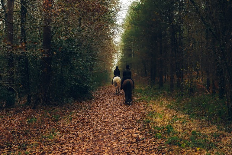 Horse riding through the forest