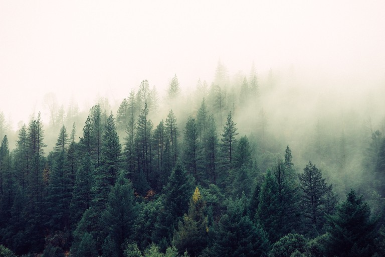 Mist over the trees