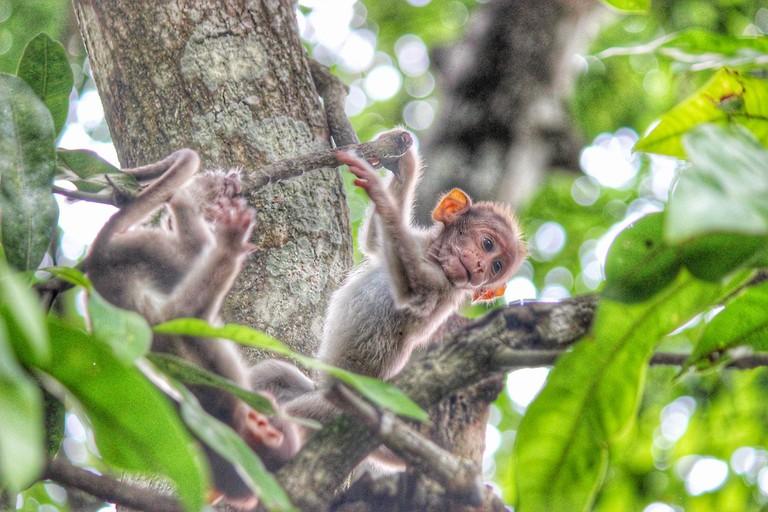 monkey-2752058_1280