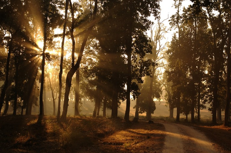 Morning sunlight piercing through the trees at Kanha National Park