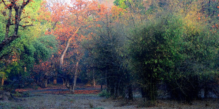 Early morning at Bandhavgarh National Park