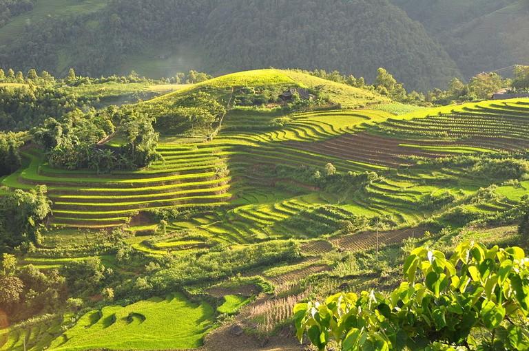 Rice fields of Sapa | © Konstantin Krismer