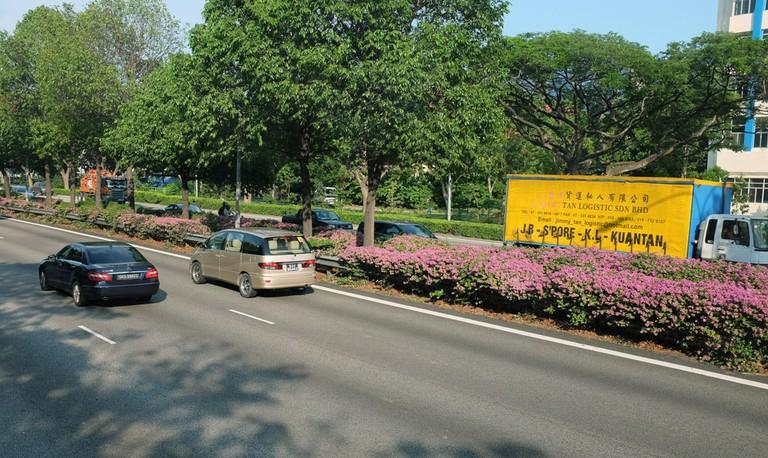 Singapore Expressway Landscaping Bougainvillea