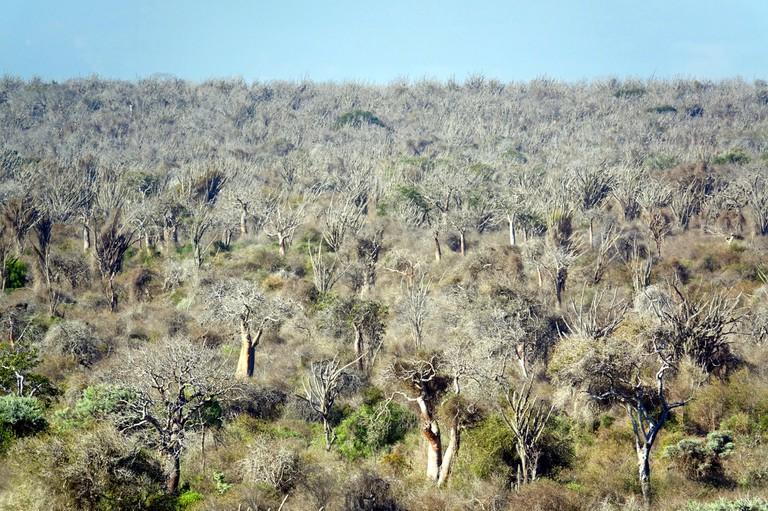Madagascar's unique spiny forest ecoregion