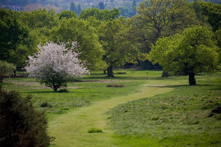 Sutton Park, Birmingham