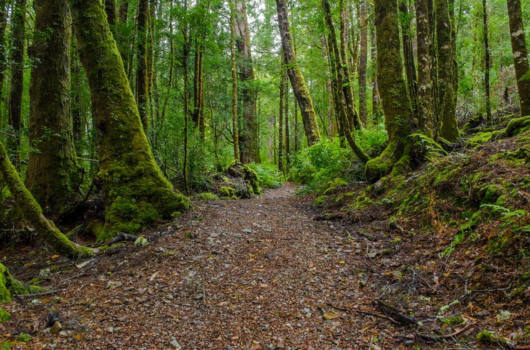 Tasmanian devils live in this Tasmanian forest