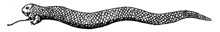 An artist's impression of the Tatzelwurm circa 1841