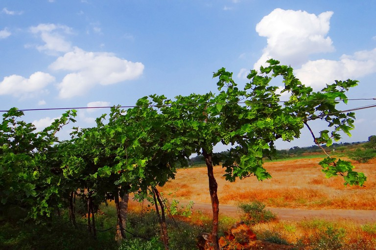 There are many charming vineyards in and around Bangalore to see