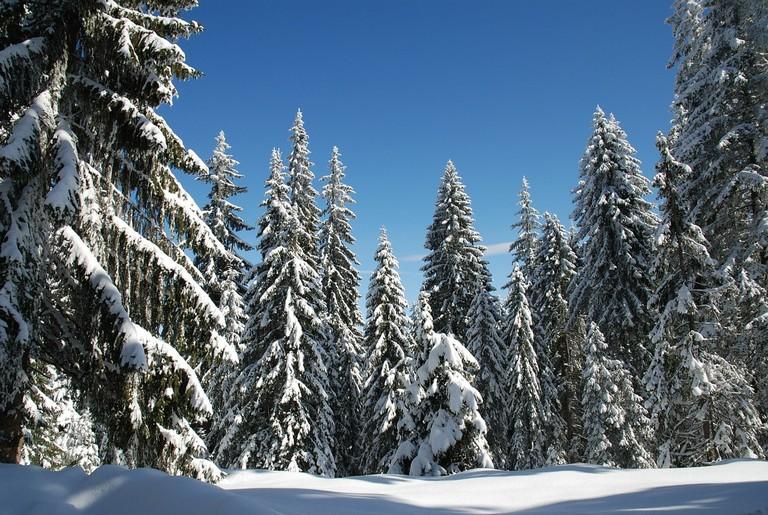 winter-206082_1280