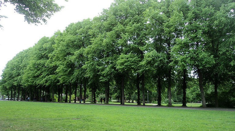 1024px-Frogner_Park_Trees