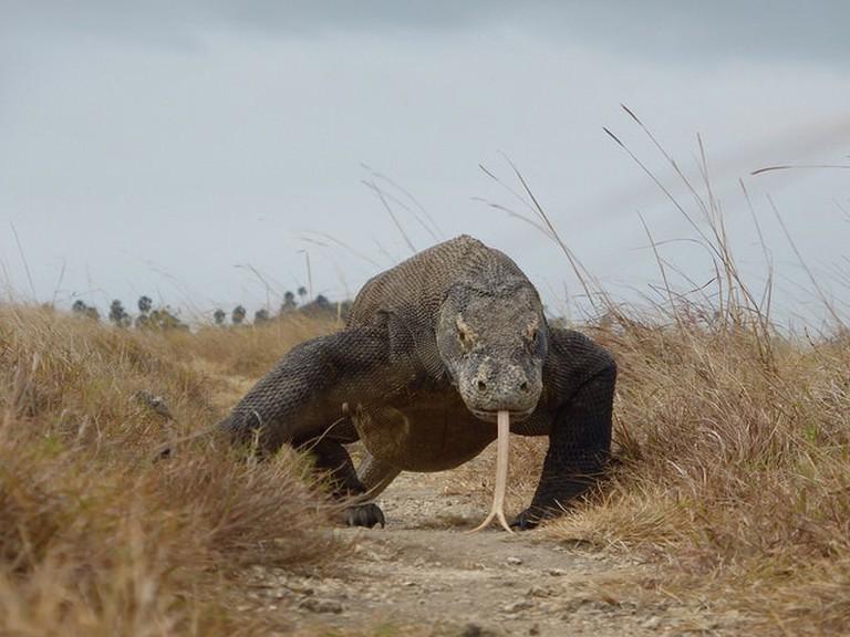Visiting Rinca and Komodo