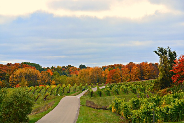 Michigan's scenic wine country