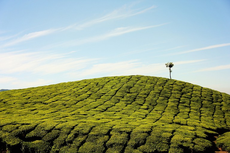 The stunning landscape of the tea plantations in Munnar