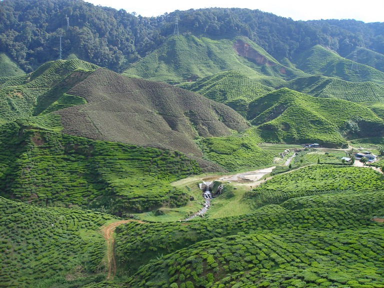 Tea plantation view in Cameron Highlands | © Khairil Yusof/Flickr