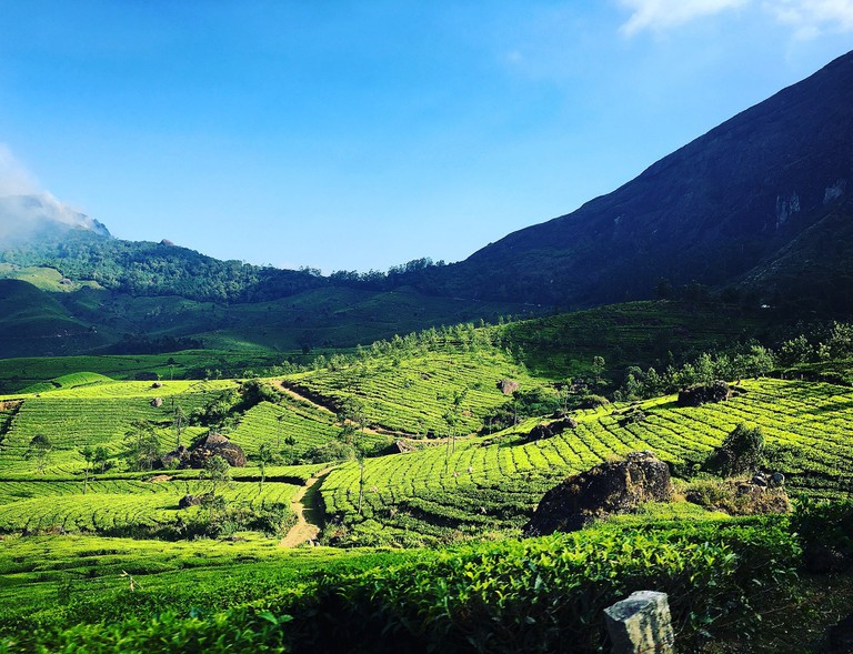 Visit guided tea plantation tours in Munnar