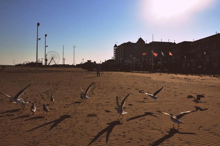 Ocean City Boardwalk|© Ashley Harrigan/Flickr