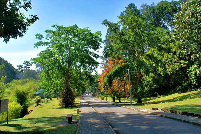 One of the oldest botanical gardens in Malaysia | © Khalzuri Yazid/Flickr