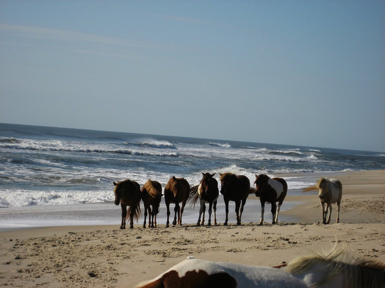 Assateague Island National Seashore | © Mrs. Gemstone/Flickr