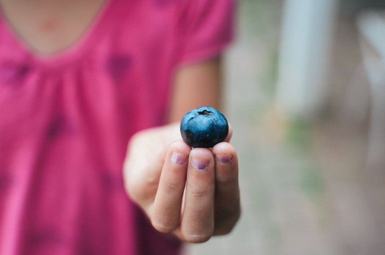 A perfectly ripe blueberry