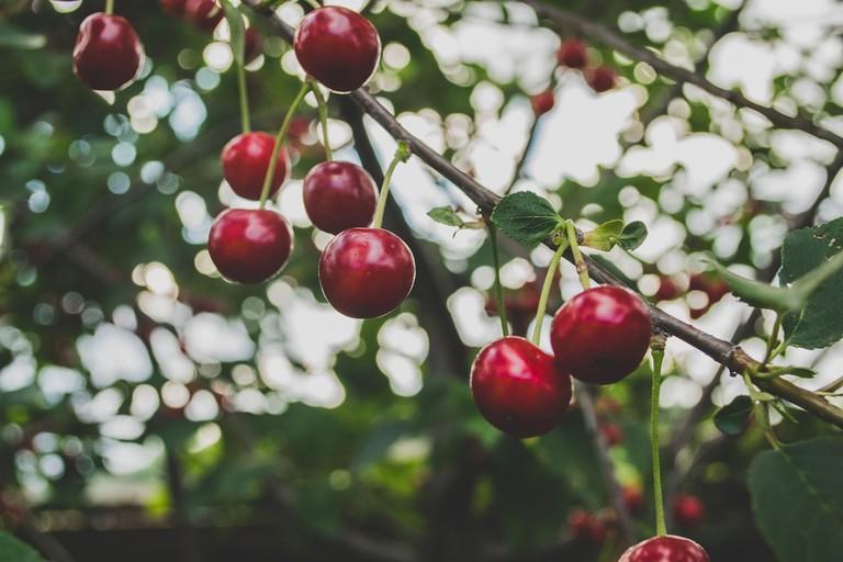 cherries-839864_1280