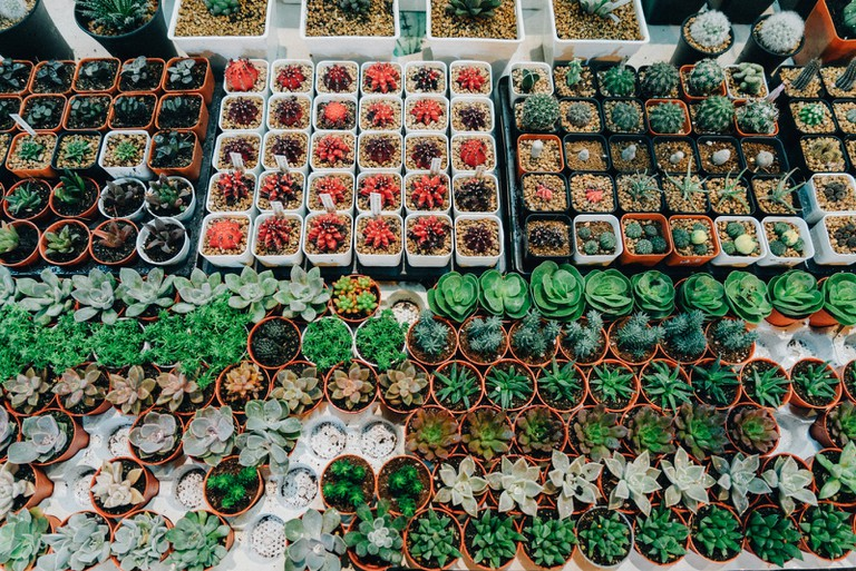 It's not just food that you can find here but also potted cactus as well