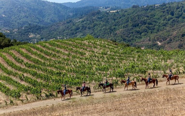 Cooper Garrod Wine Trails