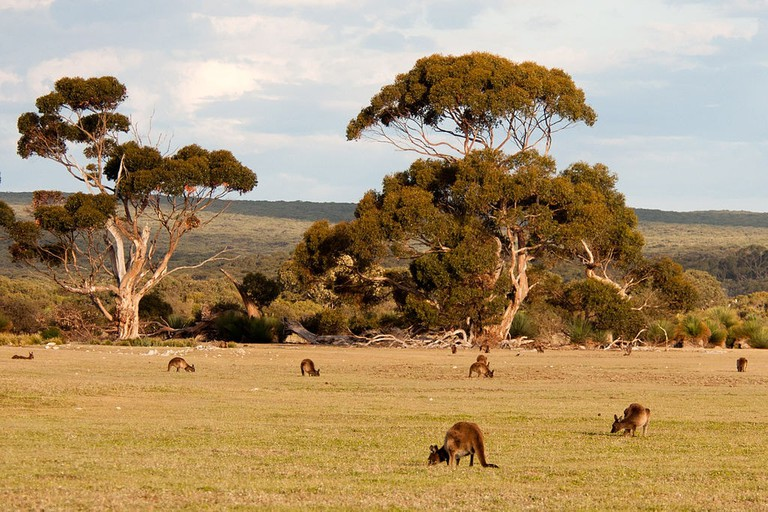 Kangaroo Island | © Paul Asman and Jill Lenoble:Wikimedia Commons