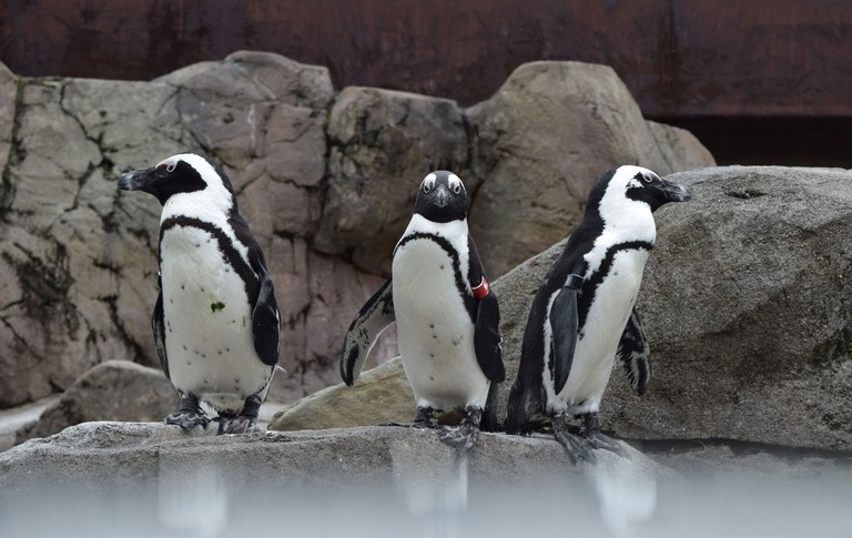 penguins-aviary